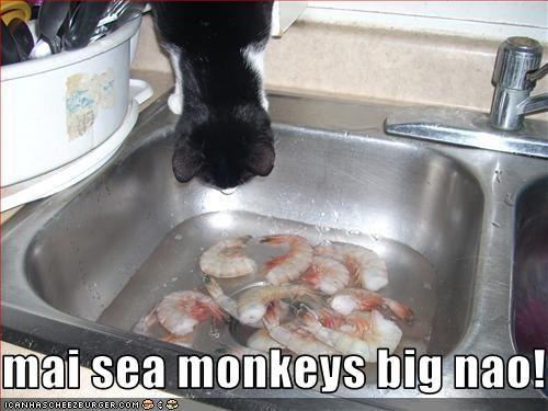 sea monkeys shrimp sink - 3113244672
