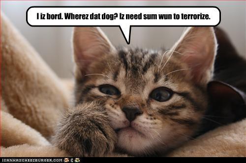 bored dogs plotting - 3113306880