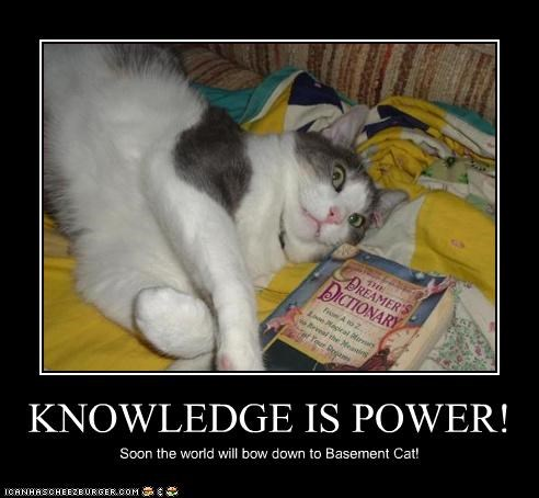 KNOWLEDGE IS POWER! Soon the world will bow down to Basement Cat!