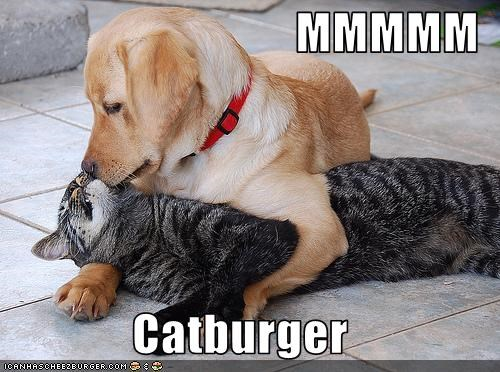 Cheezburger Image 3113667072