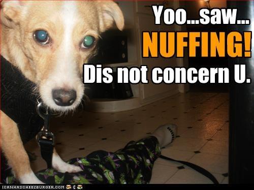 jack russel terrier murder - 3113849088