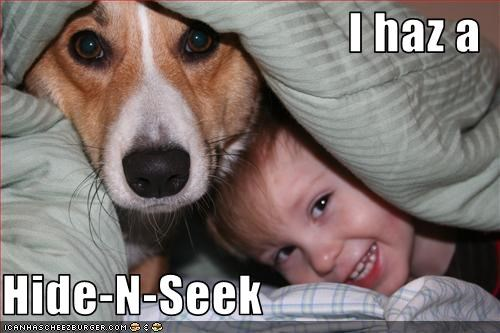 baby,corgi,hide and seek,human,playing