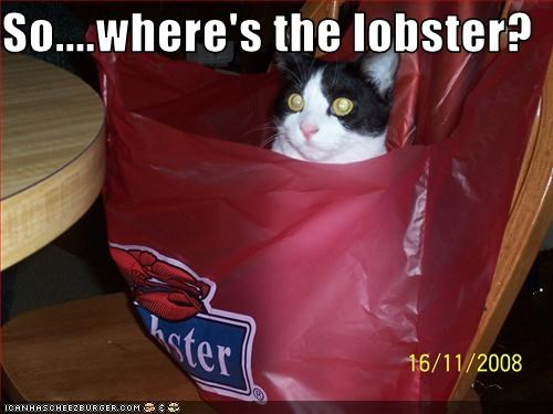 fud lobster want - 3114230272