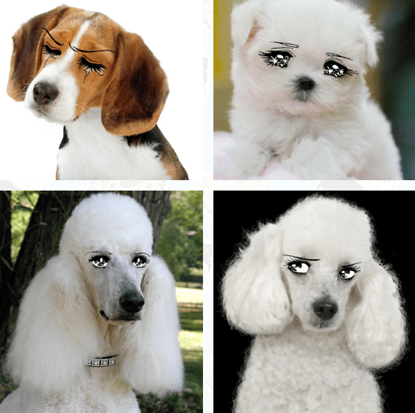 dogs with anime eyes