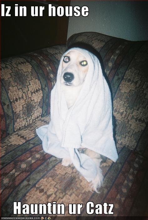 ghost haunting labrador - 3115873792