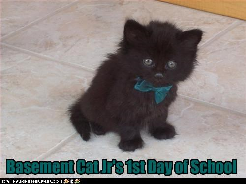 basement cat costume cute kitten school - 3115876608