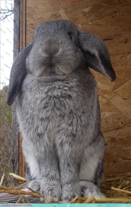 bunny puns rabbit - 3116016384