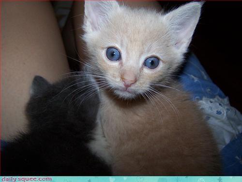 face hypno kitten kitten - 3117161472