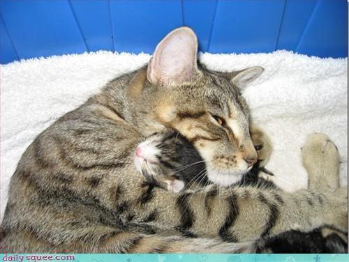cat kitten mom - 3118156032