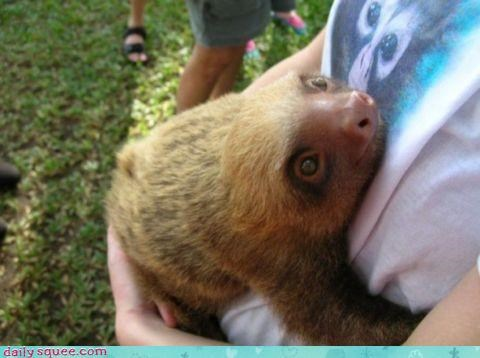 cute,hug,sloth,slow