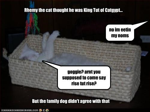 Rhemy the cat thought he was King Tut of Catgypt... But the family dog didn't agree with that goggie? arnt you supposed to come say rise tut rise? no im eetin my noms