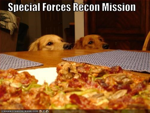 golden retriever pizza want - 3118772224