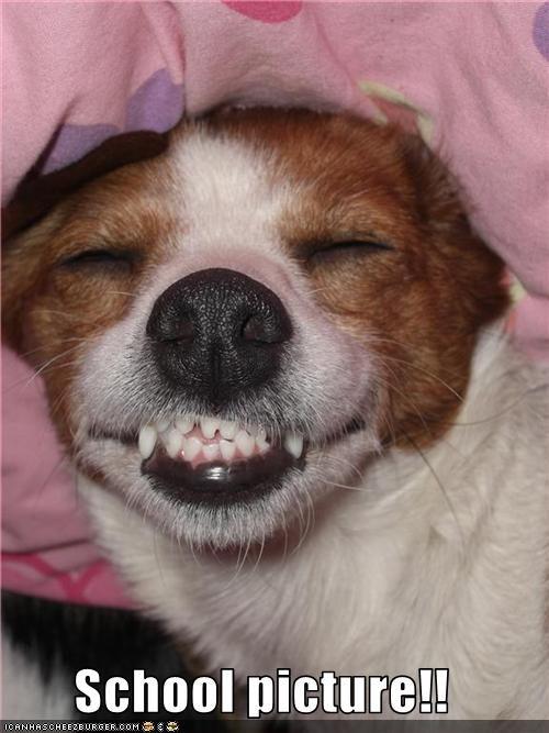 jack russel terrier picture school smile - 3119197440