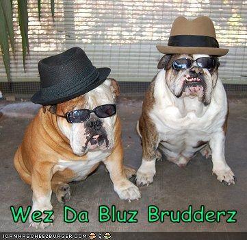 Cheezburger Image 3119846144