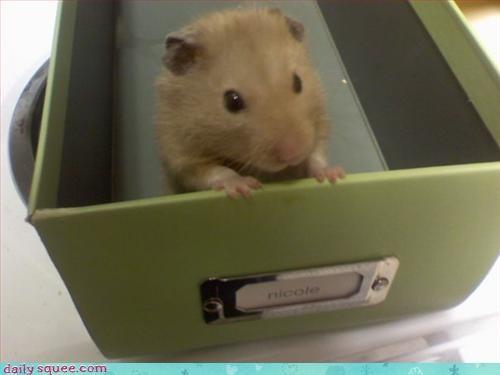 cute hamster so tiny - 3119855360