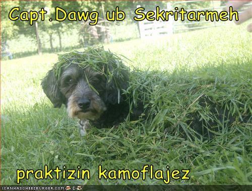 Cheezburger Image 3120323584