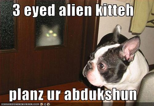 Cheezburger Image 3120884480