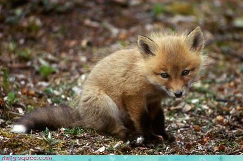 clever cute fox - 3121448192