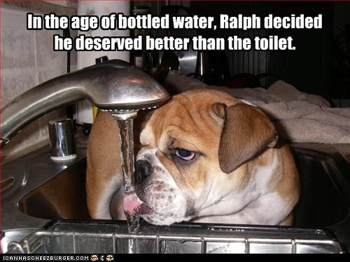 bottle bulldog drinking sink toilet water - 3121492224