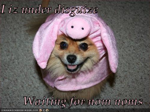 Cheezburger Image 3121504768