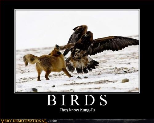 birds fight kung fu