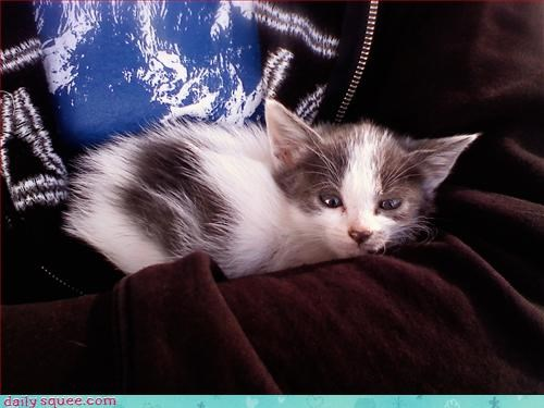 cute kitten sleepy - 3121676288