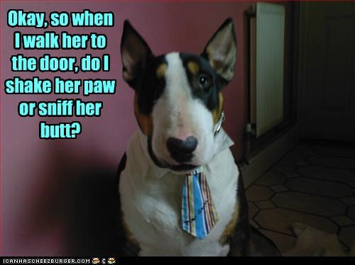 bull terrier butt costume paw shake sniff tie - 3121923584