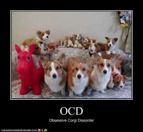 compulsion,corgi,obsessive,ocd