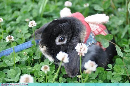 bunny brigade rabbit 3 rabbitier - 3122872576