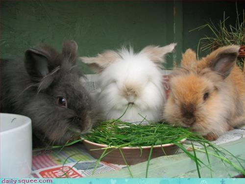 bunny noms rabbit - 3122933248