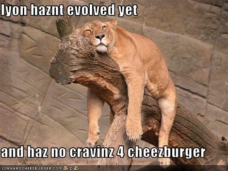 Cheezburger Image 3123046656