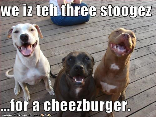 Cheezburger Image 3123057408