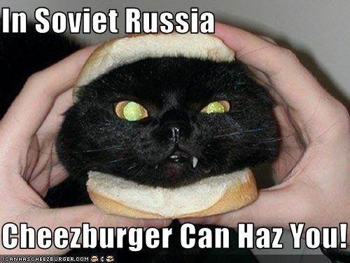 Cheezburger Image 3123565568
