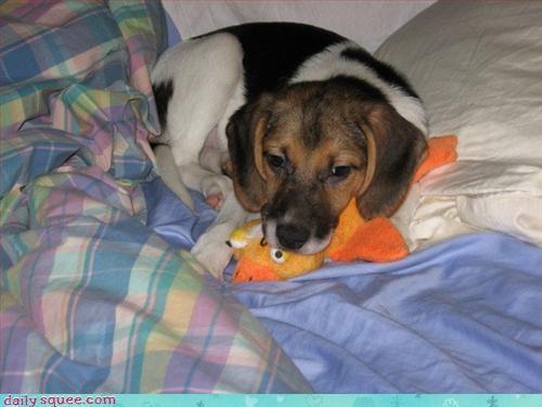 puppy sleepy - 3124774912