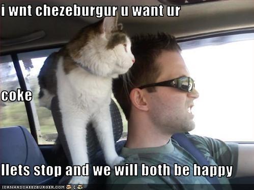 Cheezburger Image 3125393664