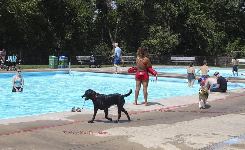 a photo of a public pool being invaded by dogs for it's first dog pool day - cover for a small story on dogs
