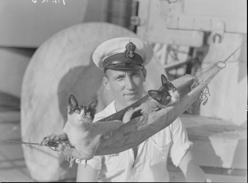 photos showing cats contributing to the war efforts