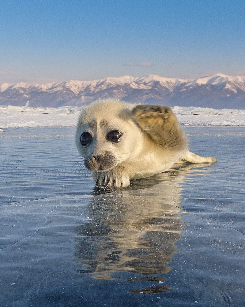 Cute photos of baby seal