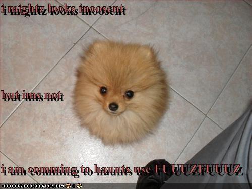 Cheezburger Image 3126283264