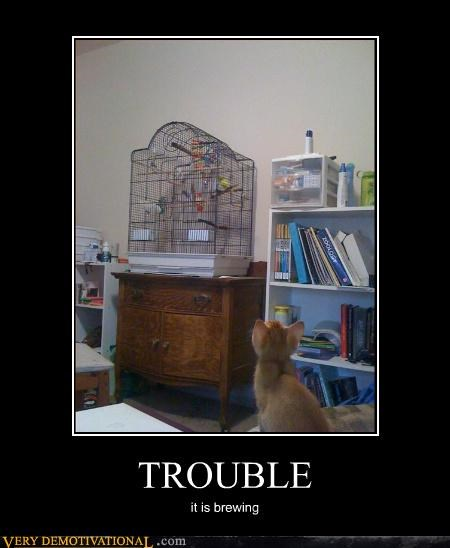 cat bird evil trouble planning - 3126362368