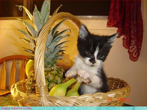 cute,fruit,kitten
