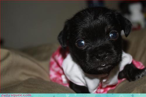 cute dogs dress - 3126655744