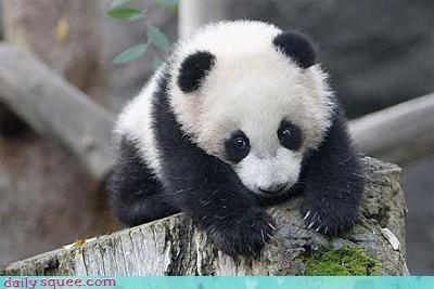bamboo noms panda - 3127164416