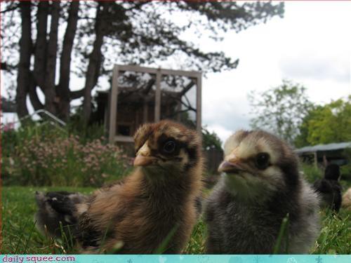 baby birds birds chicks - 3127373056