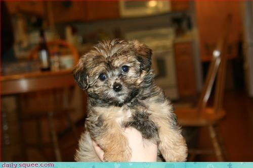 dogs puppy what is it - 3127621376