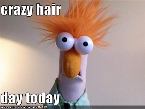 Crazy Hair Day Today Cheezburger Funny Memes Funny Pictures