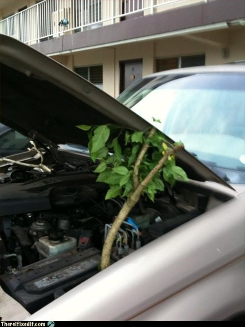 branch,car,propped open,recycling-is-good-right,treee