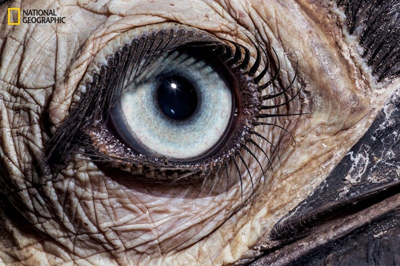 PHOTOS OF ANIMAL EYES
