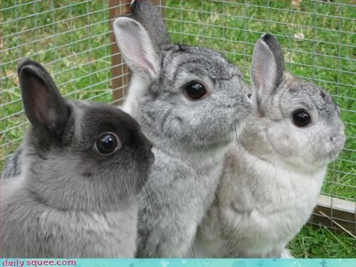 bunny,siblings,trios