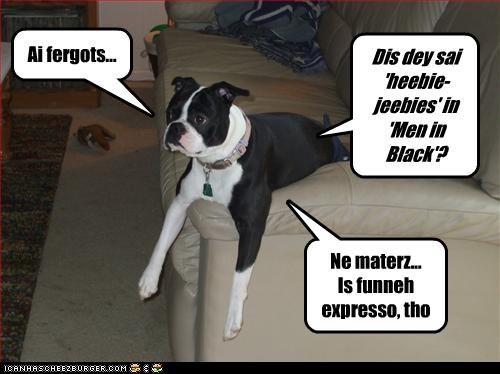 Cheezburger Image 3130246400
